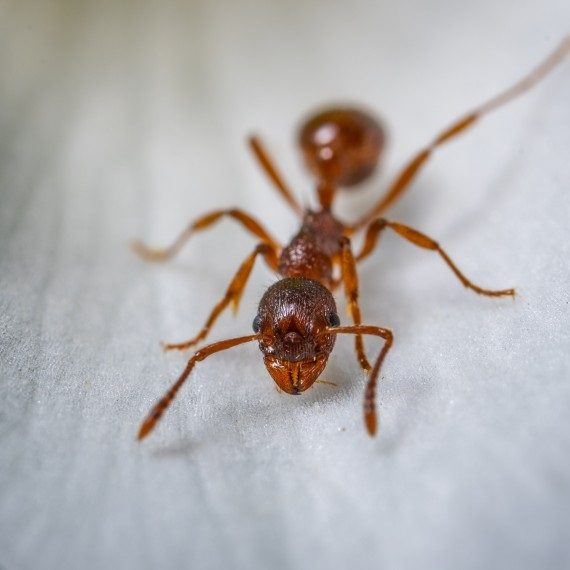 Field Ants, Pest Control in Grove Park, SE12. Call Now! 020 8166 9746