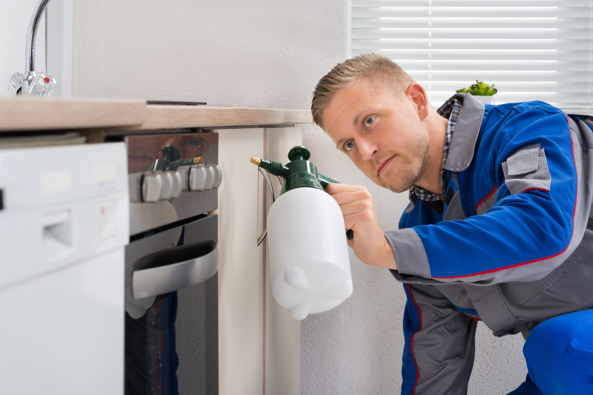 Pest Inspection, Pest Control in Grove Park, SE12. Call Now 020 8166 9746