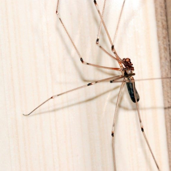 Spiders, Pest Control in Grove Park, SE12. Call Now! 020 8166 9746